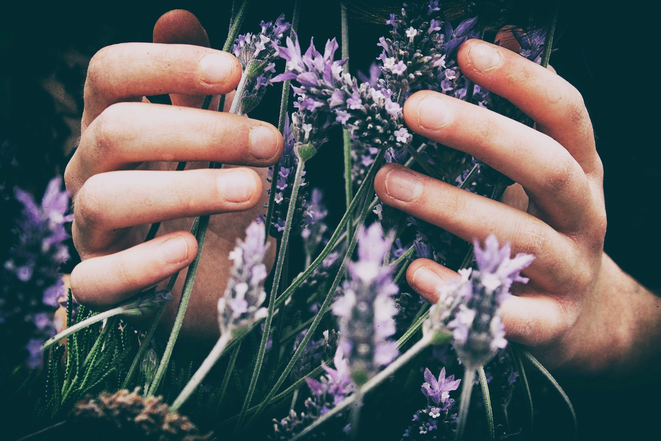 Hands and Lavender